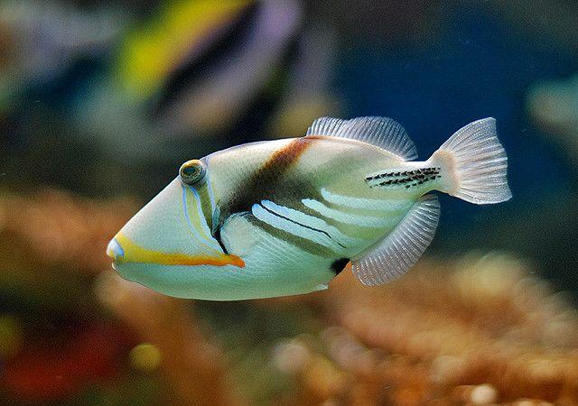 New England Aquarium Tropical Fish Animais Marinhos Animais Peixes