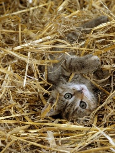 Giggling Children And Playful Pets In The Cozy Haybarn Our Own Special Live Theatrical Shows Don T Have Time For A Kittens Domestic Cat Cute Animals