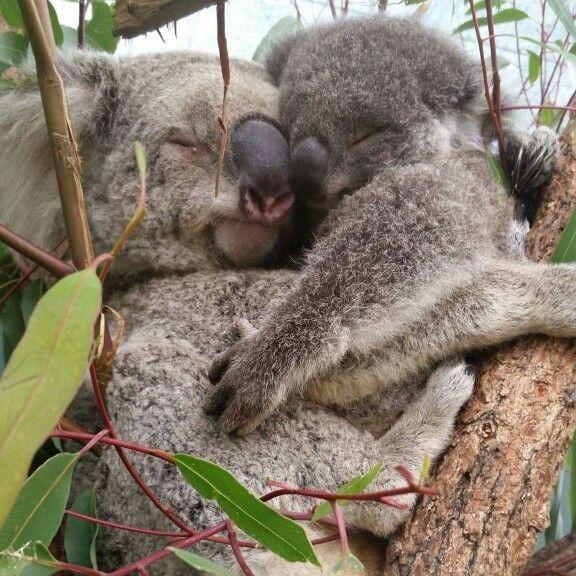 Pin By Anja Angelskaja On Animals Pinterest Snuggles Cute