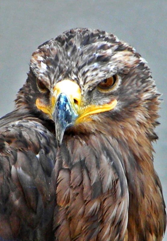 When You Have The Hawk As A Spirit Animal You May Have An