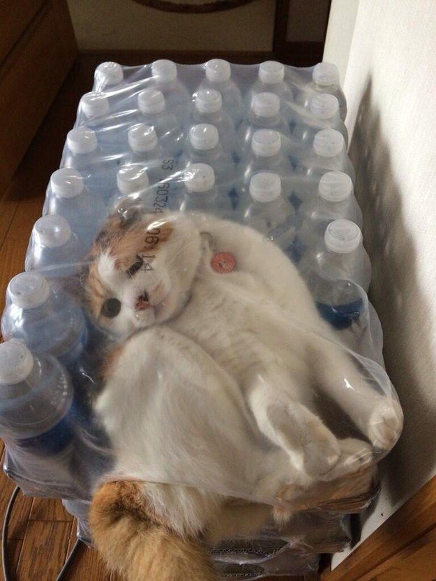 This cat whose only crime was getting a little thirsty.   37 Animals Who Failed So Spectaculary They Almost Won