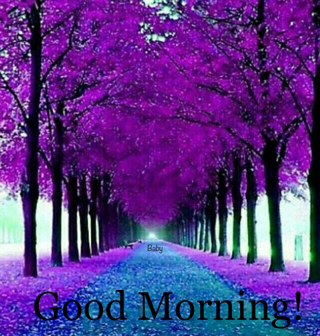 Good Morning Beautiful Nature Purple Trees Beautiful Tree