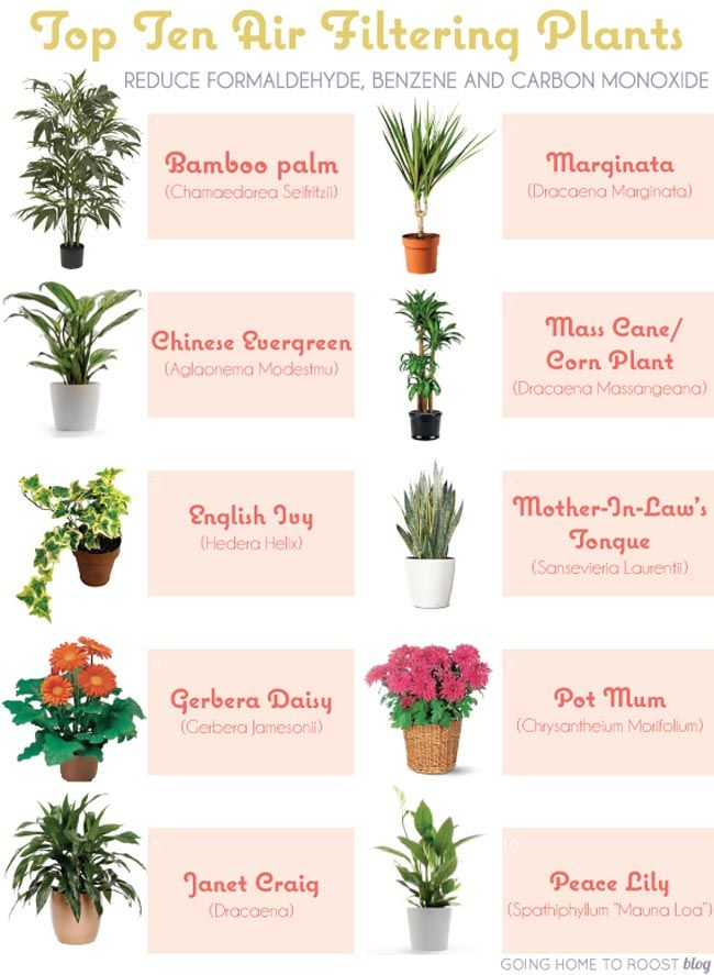 6 House Plants that Clean Your Air #houseplant