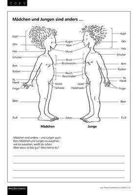 4 sachkunde sexualkunde klasse Sexualkunde arbeitsblätter