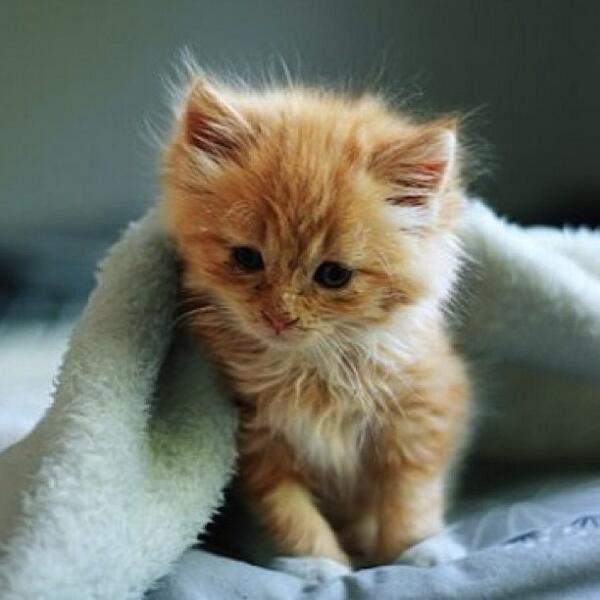 Sleepy little kitten. …
