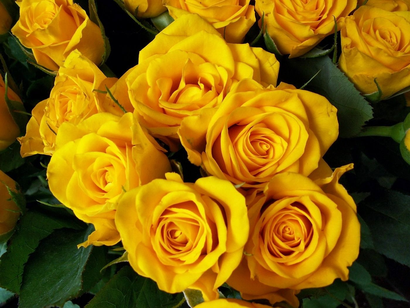Pin by Reginald Anderson on Roses Yellow roses, Flowers