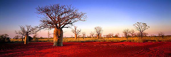 Ken Duncan: Boab Trees of Western Australia
