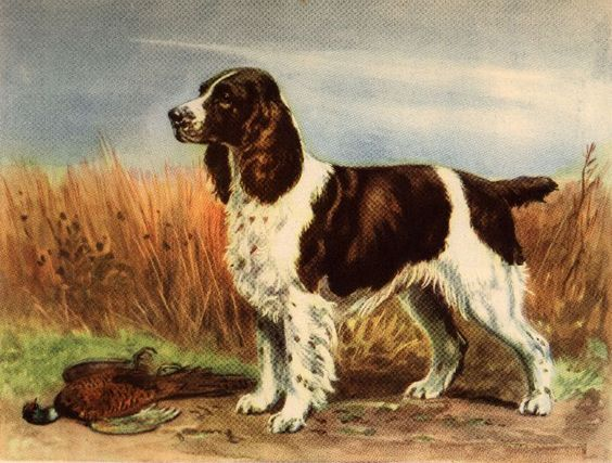 A Snippet Of English Springer Spaniel History Spaniel Art Dog Print Art English Springer Spaniel