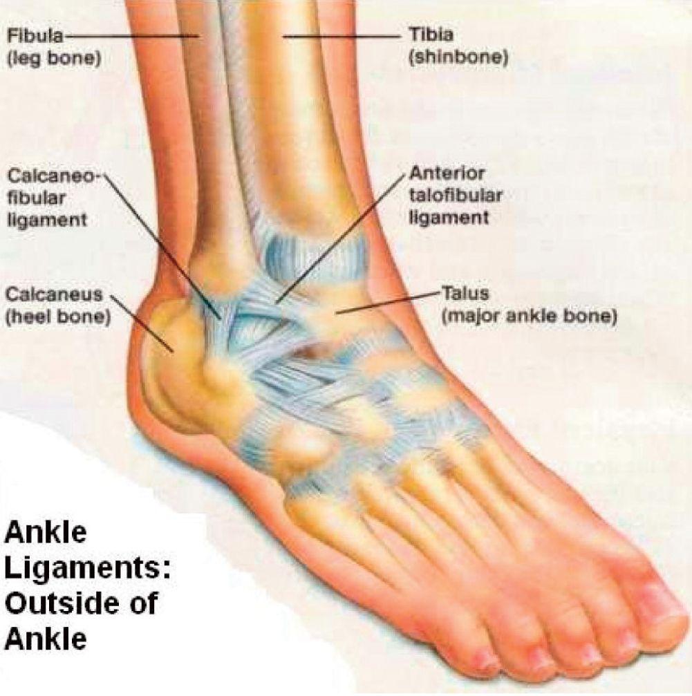 The Anterior Talofibular Ligament is under maximum tension during ...
