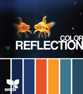 color reflection by design seeds