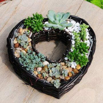 Sauce en forma de corazón de la cesta de flores plantas suculentas