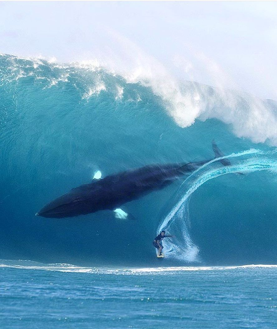 Once in lifetime photo....Amazing!!!! surfing with whales <3