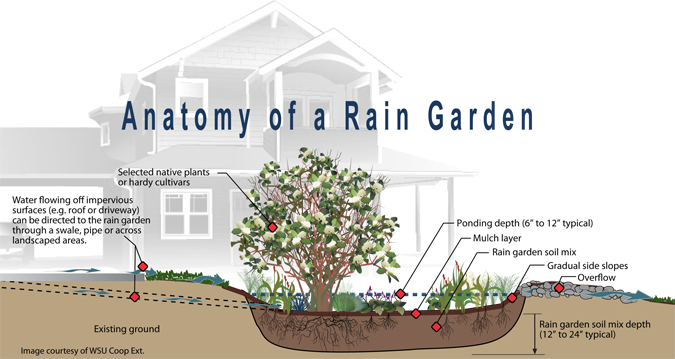 Rain Gardens-Harvesting Rain in the Pacific Northwest | Rain ... on green wall plants, rain glass frog, phytoremediation plants, chemical waste plants, rain landscape, green roof plants, organic insecticides plants, fountain plants, water plants, rain coffee, rain art drawings, native plants, gardening plants, rain showers umbrella clip art, rain lily plant, small outdoor plants, summer flowering plants, bioretention plants, miniature dwarf or plants, rain on crops,
