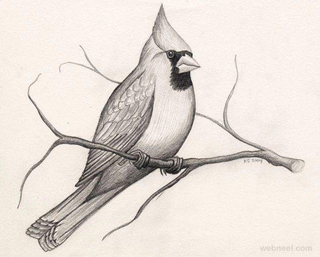 Beautiful Pencil Sketches Of Birds