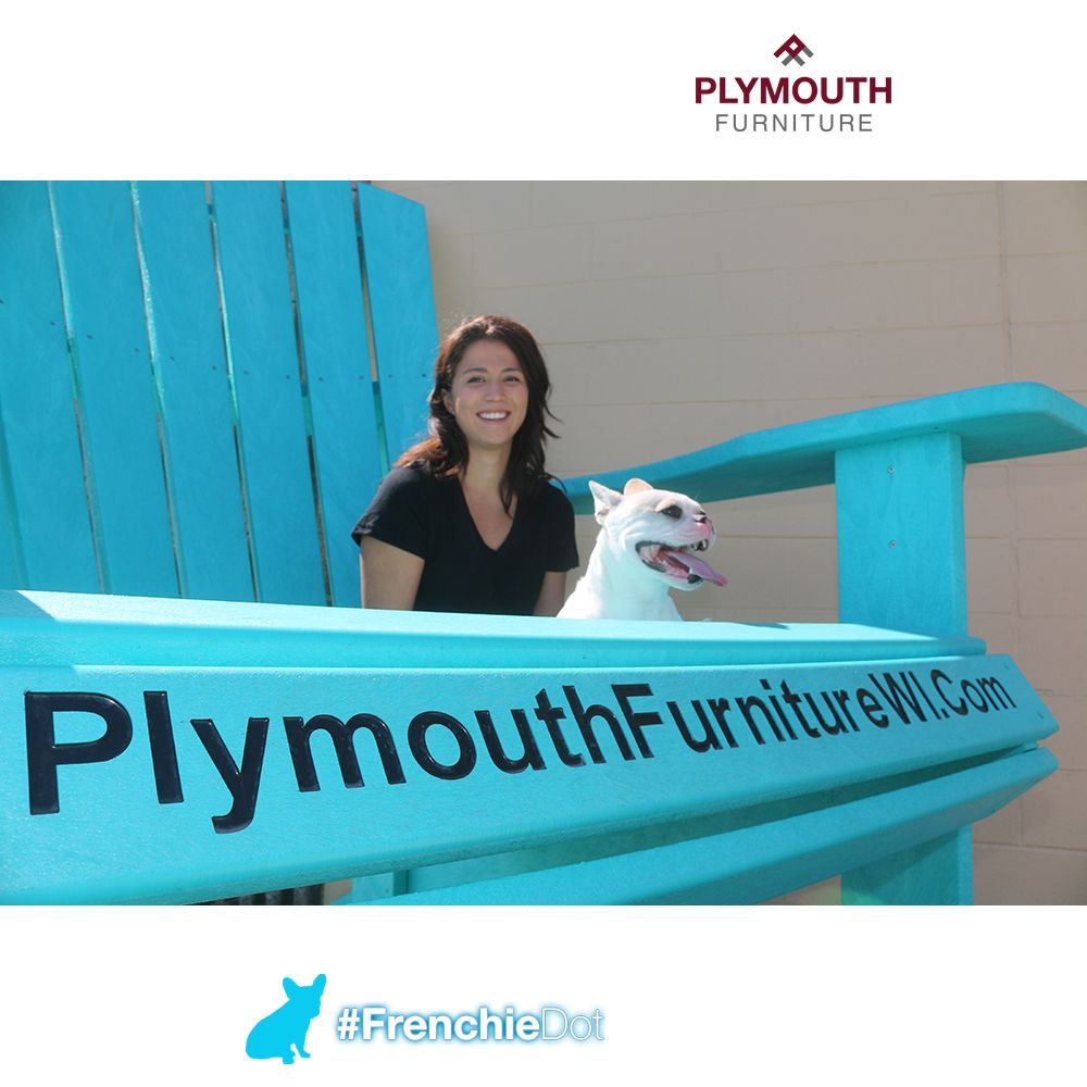 All Our Frenchiefriday Posts And Frenchiedot Posts Plymouth