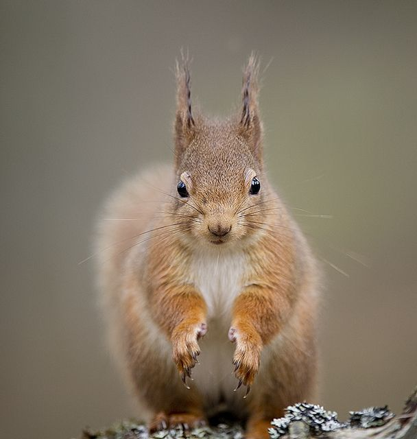 Image result for clapping squirrel