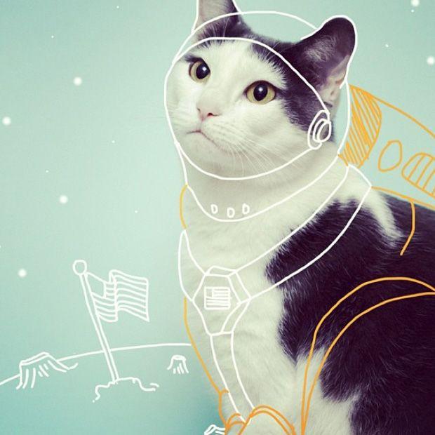 I Draw on Cats traz ilustrações de artista em seu gato Bob