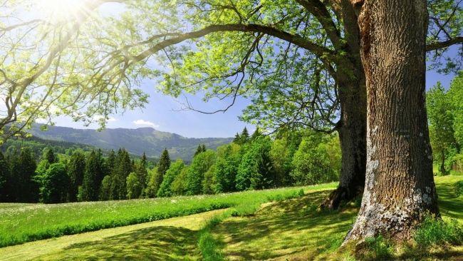 Herunterladen 1920x1080 Full Hd Hintergrundbilder Baume Tal Tanne Berge Sommer Gras 1080p Baum Desktop Hintergrund Berge