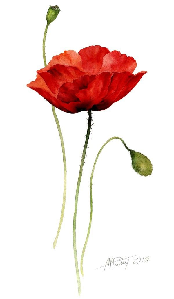 Single Poppy Watercolor Poppies Watercolor Flowers Flower