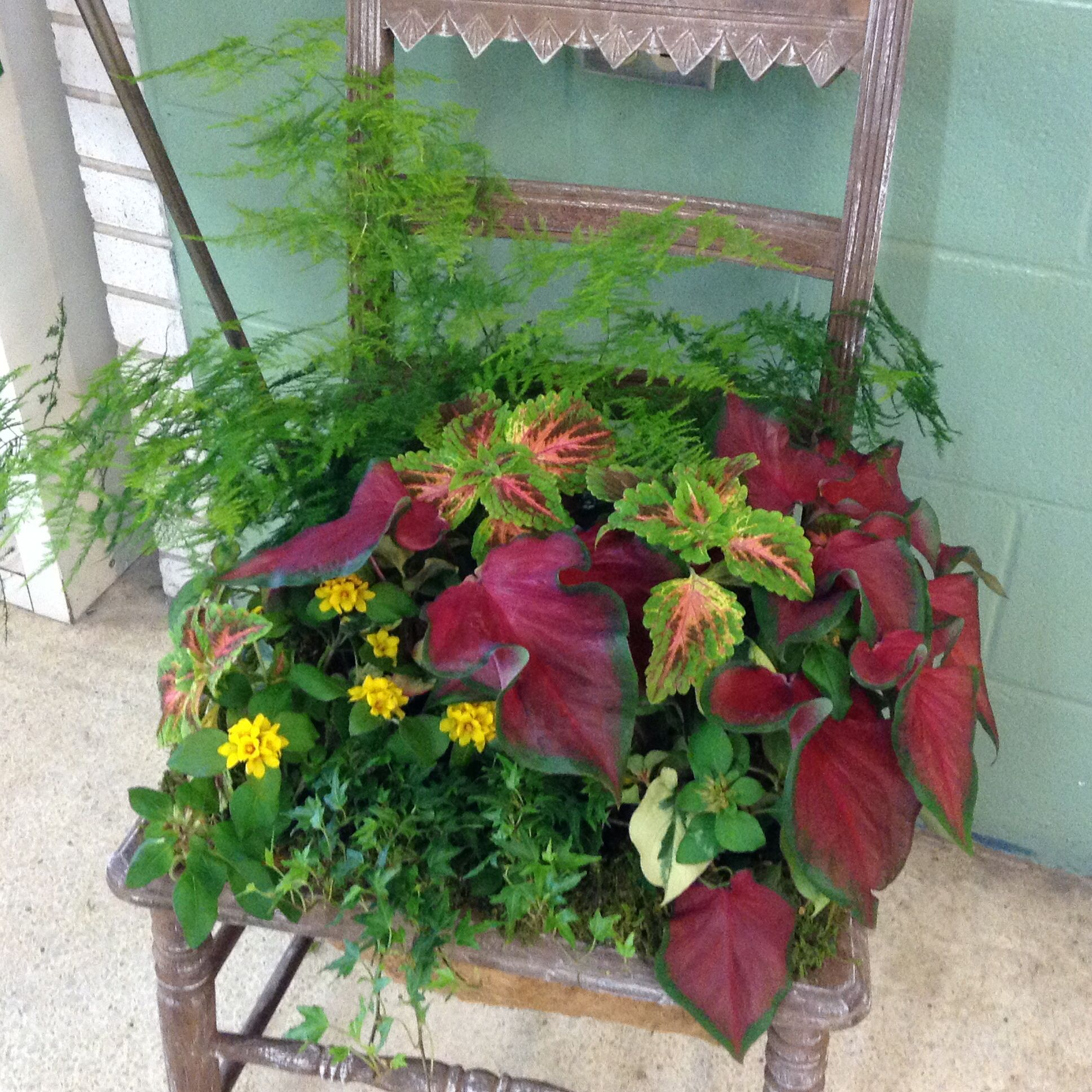 Vintage Chair Planted For The Shade. By Debby Boyd Of