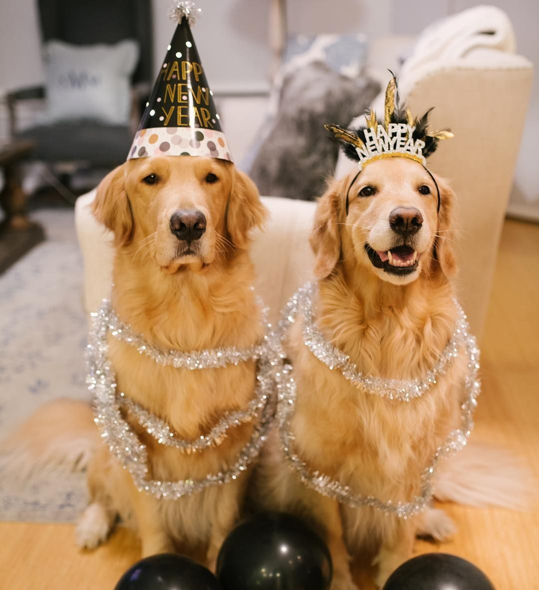 These Golden Retriever Pups Really Know How To Ring In The New