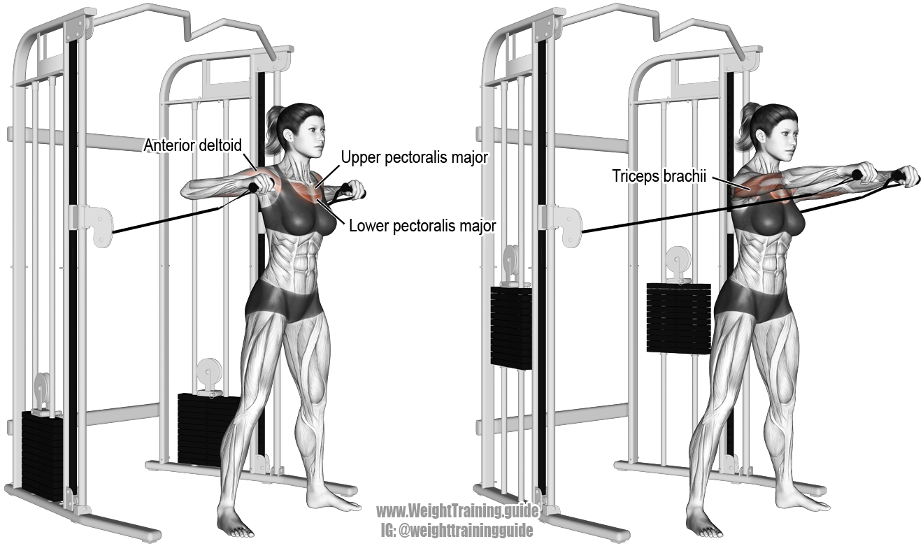 Standing Cable Chest Press Instructions And Video Chest