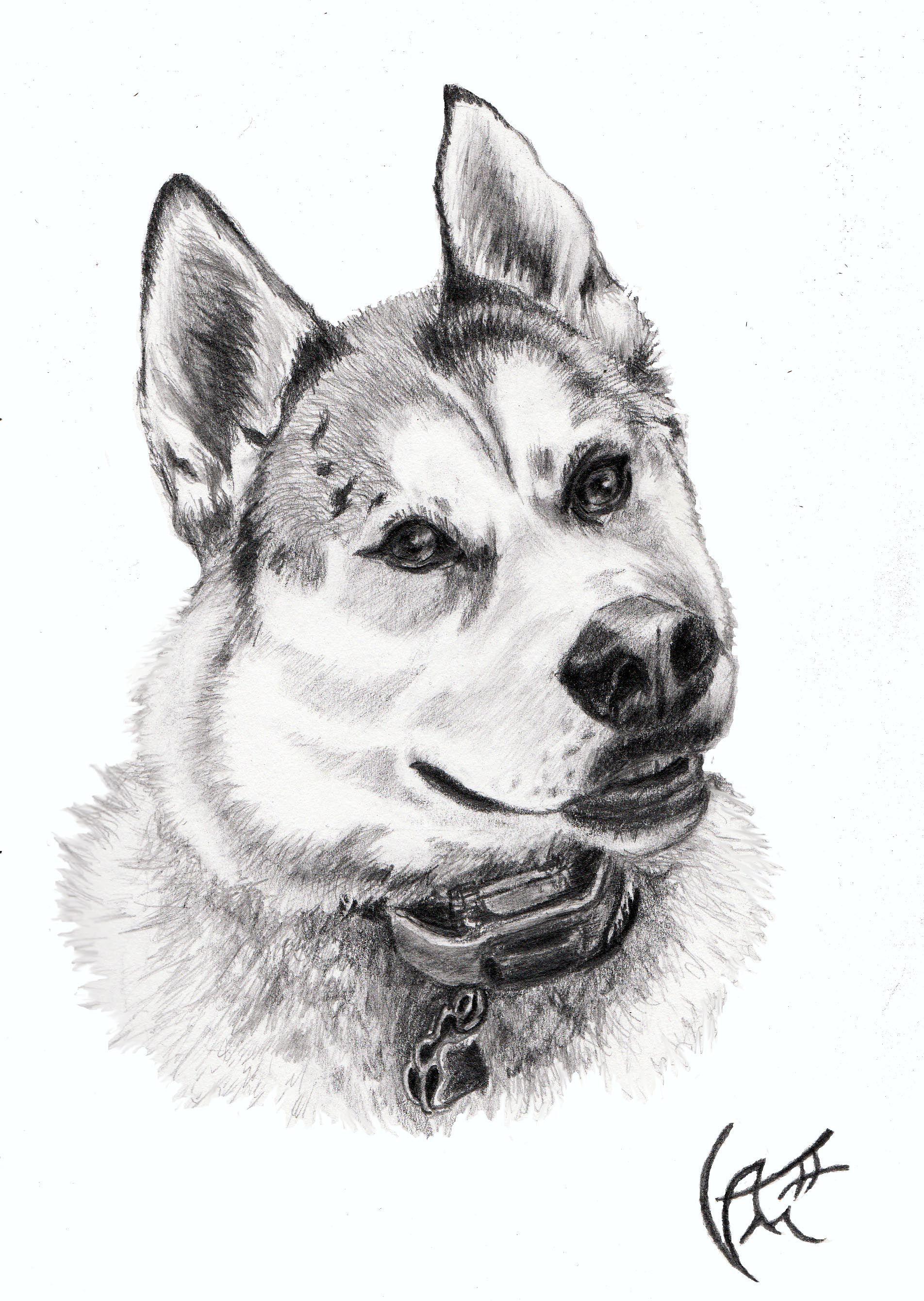 Modern Science Based Dog Training Dogs Dog Training Puppies