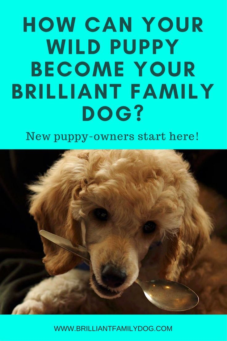 Dog Training Puppy Training New Puppy This Is Where You Start