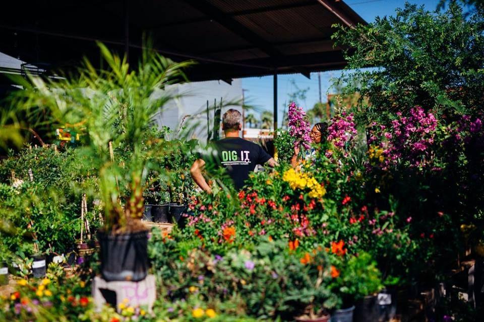 The 10 Best Garden Centers And Nurseries In Arizona