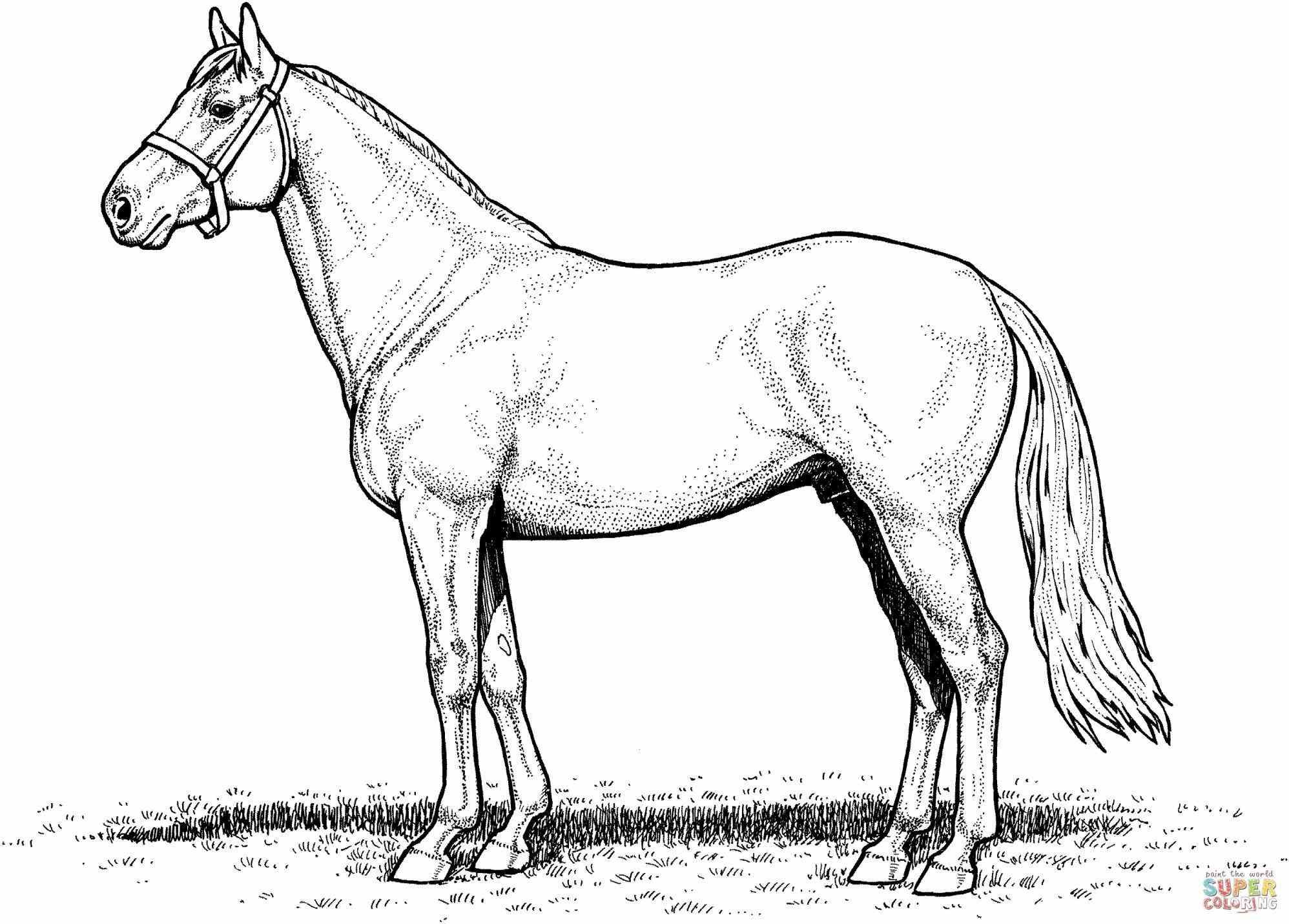 Pin By Draw Info On Drawing Your Ideas Horse Coloring Pages Horse Coloring Horse Coloring Books