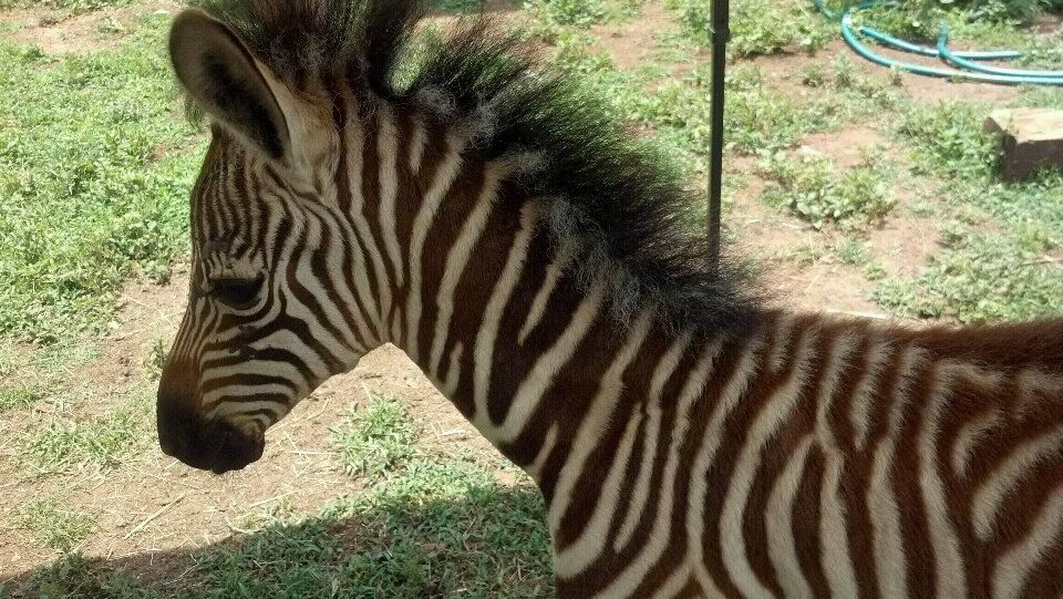 Zoo Packages Petting zoo rental, Mobile petting zoo, Zoo