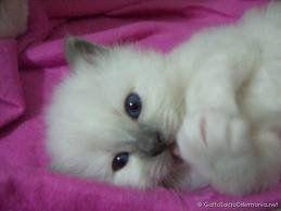 Eu já disse que amo gatos? *-*