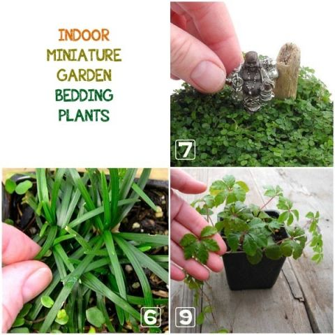 Learn How To Choose The Best Plants For Your Indoor Miniature Garden