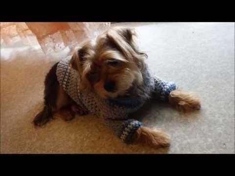 115 Como Hacer Un Sueter Para Perro Tejido A Crochet Youtube