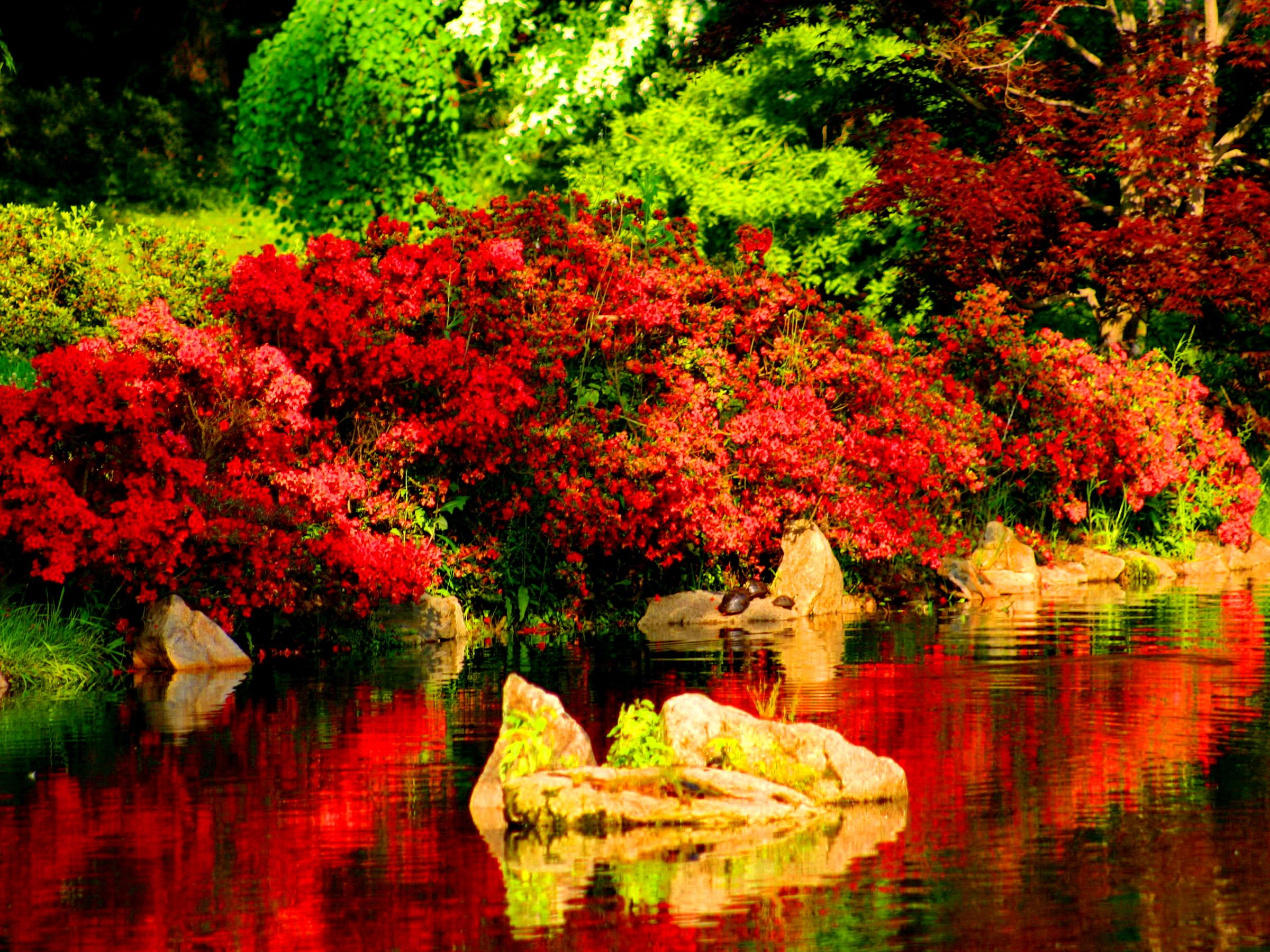 Beautiful Red Reflections In River Background images