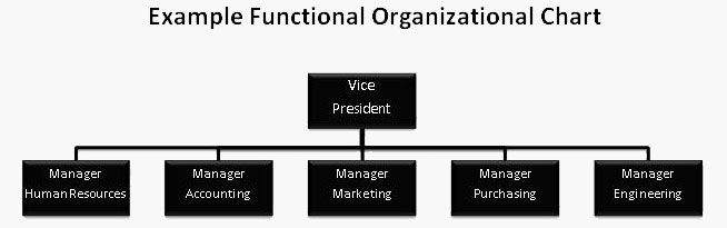 Functional Org Chart  Business    Business