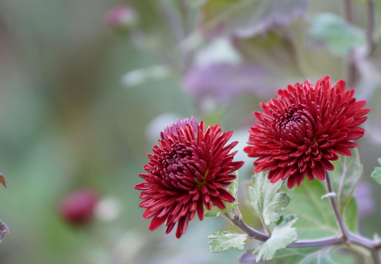 flori de toamna imagini - Căutare Google | pictura ...