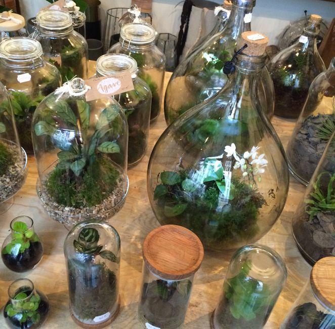 confin dans une bulle de verre ce jardin miniature appel terrarium trouve place dans nombreux. Black Bedroom Furniture Sets. Home Design Ideas