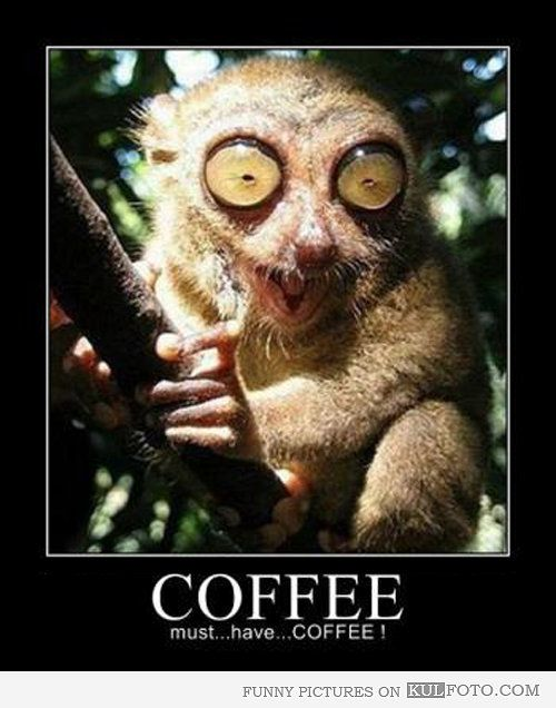 I Need Coffee Funny Must Have Coffee Funny Animal With