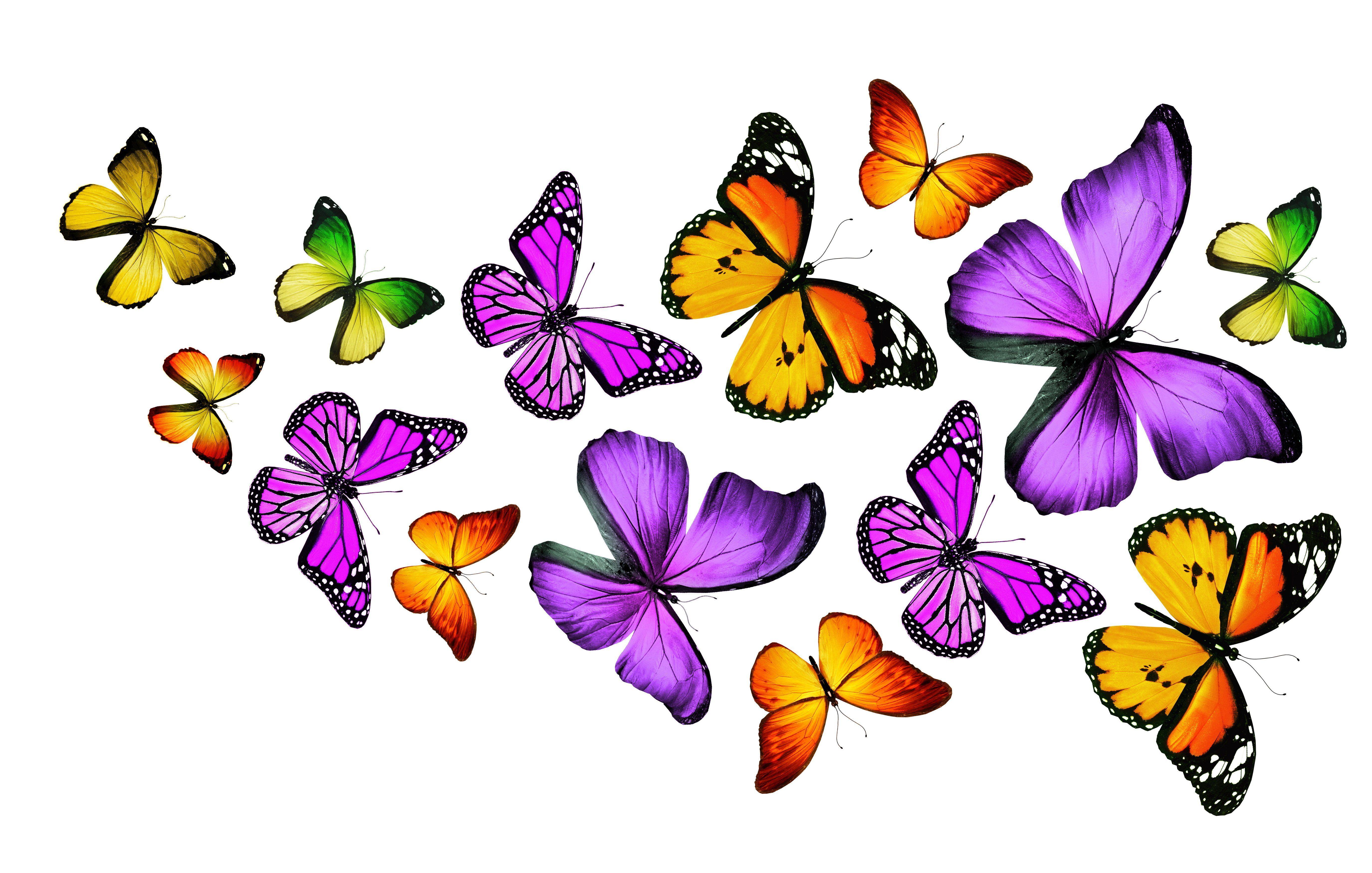 Purple Butterfly Backgrounds Butterfly background Background hd