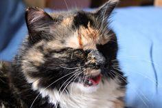 10 Cat Behaviors That Require An IMMEDIATE Vet Visit