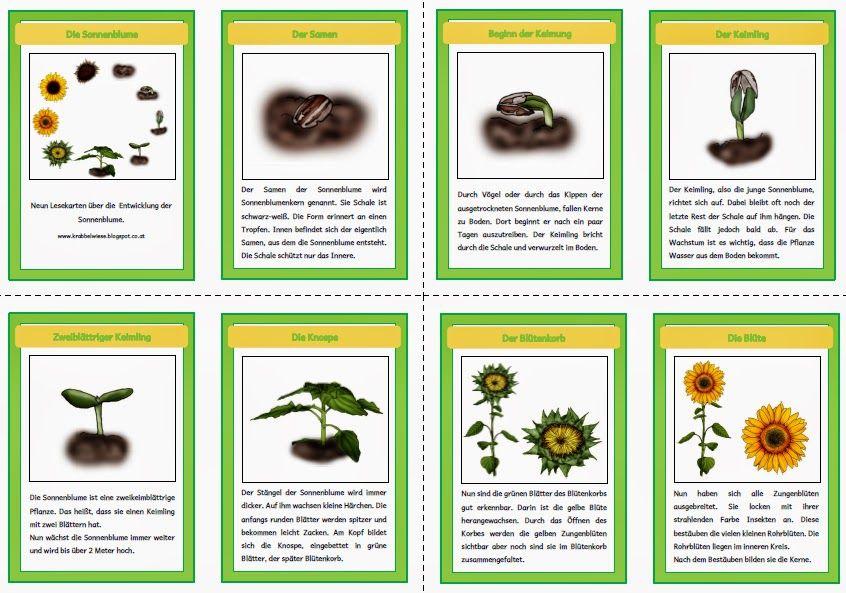 krabbelwiese: Sonnenblume   Schule   Pinterest   Sonnenblumen ...