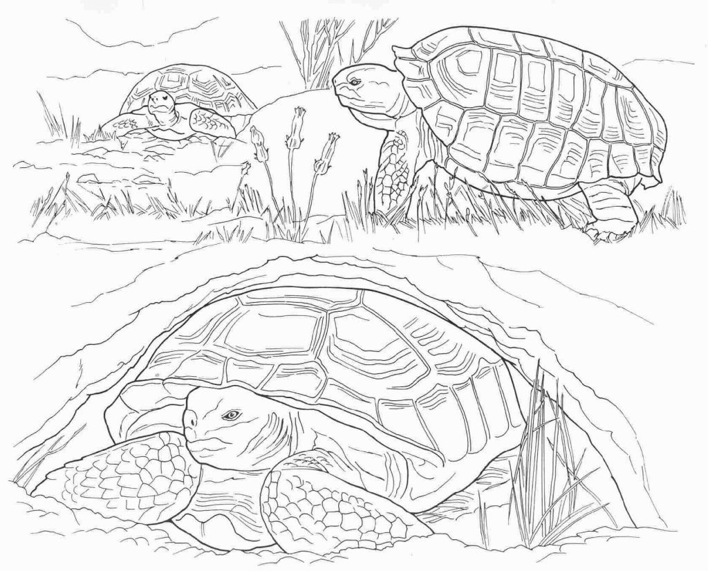 Endangered Species Coloring Pages Owl Coloring Pages Animal Coloring Pages Desert Animals Coloring