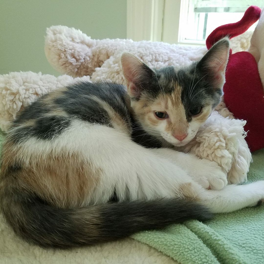 Adopt Seattle On Cute Cats Cats Kittens Here Kitty Kitty