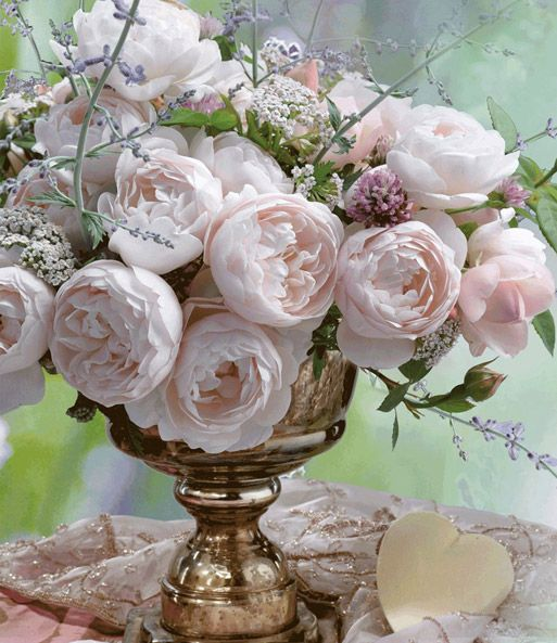 Parfum-Rose u0027Vichy®u0027 Rosen Pinterest