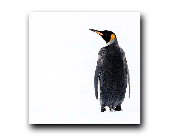 Penguin Print Penguin picture Penguin imagePenguin Photo