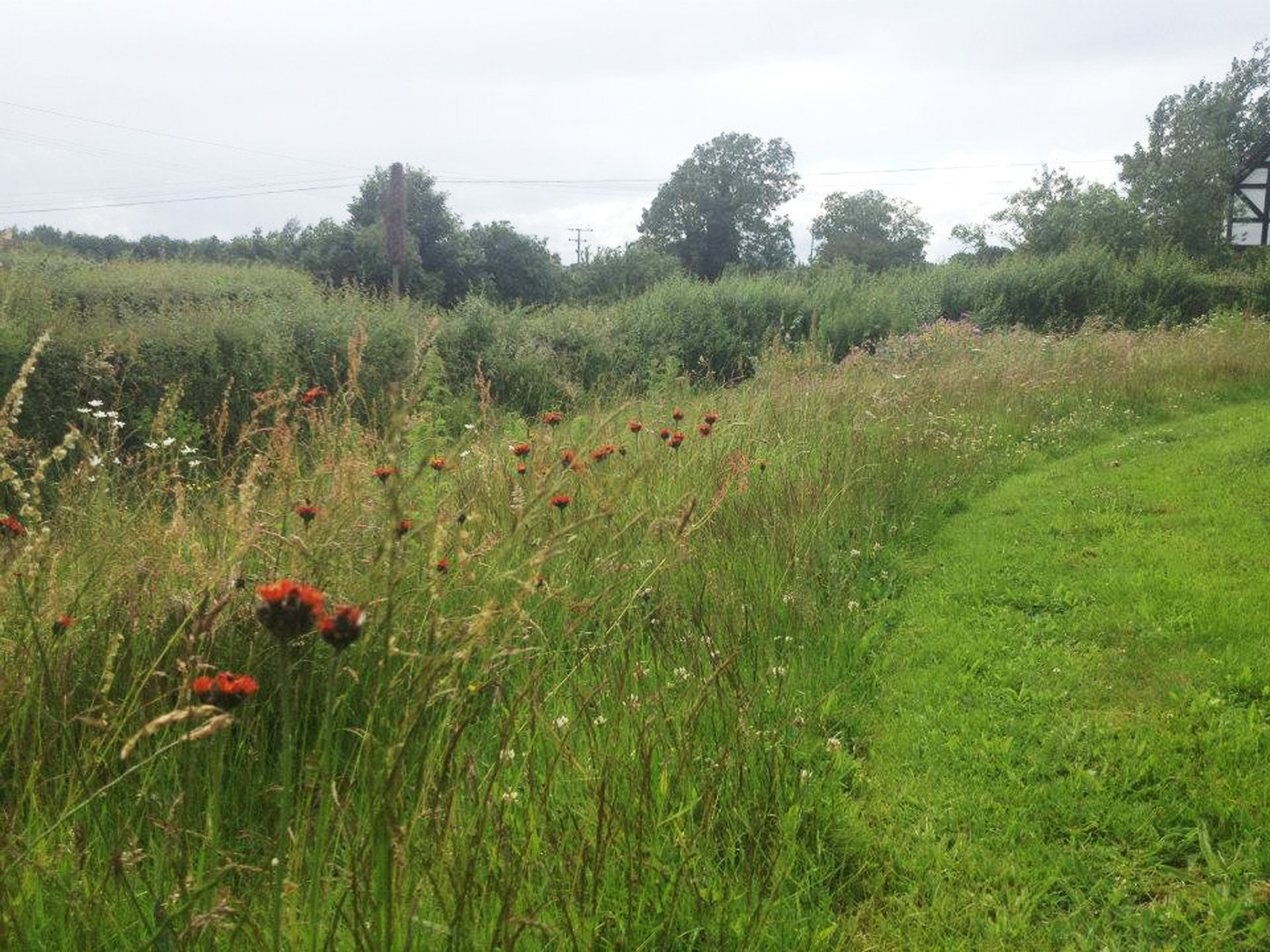 Wildflower meadow with mown path http designswithnature for Wild grass landscaping