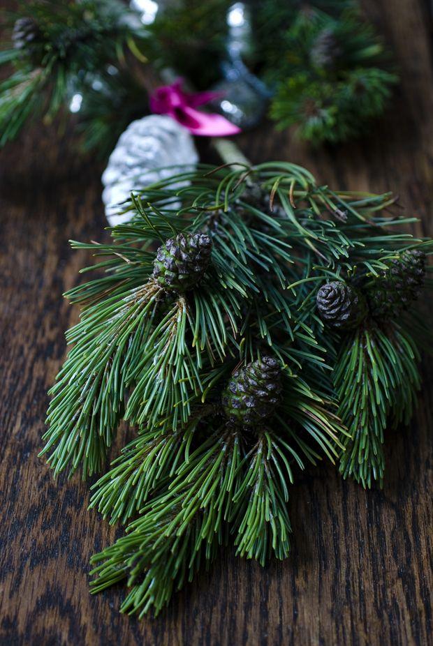 Julen er overstået, og tilbage står et grantræ, der dag for dag mister de tørre grannåle. Men juletræet og dets grene kan genbruges både kreativt og praktisk i haven.
