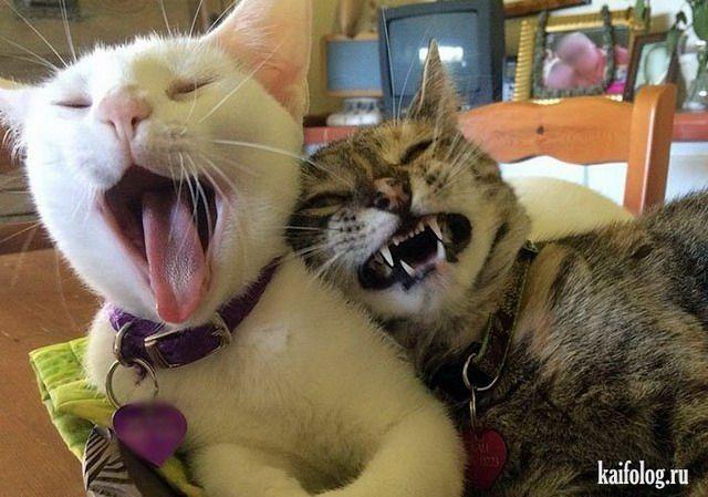 Смешные котики (55 фото) | Смешные фото кошек, Смешные ...