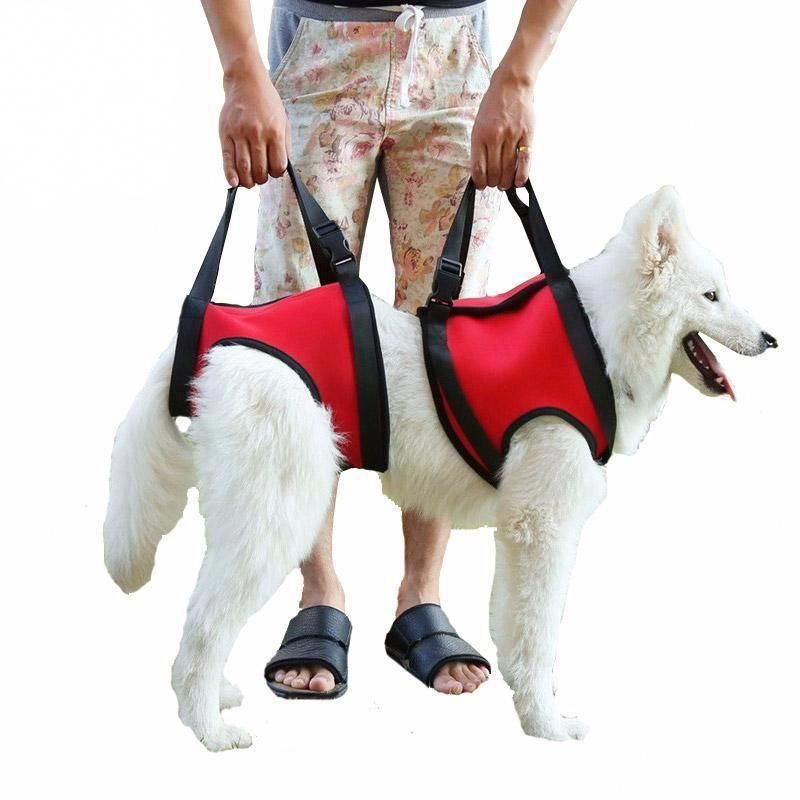 Type Dogs Feature Personalized Padded Type Harnesses Pattern